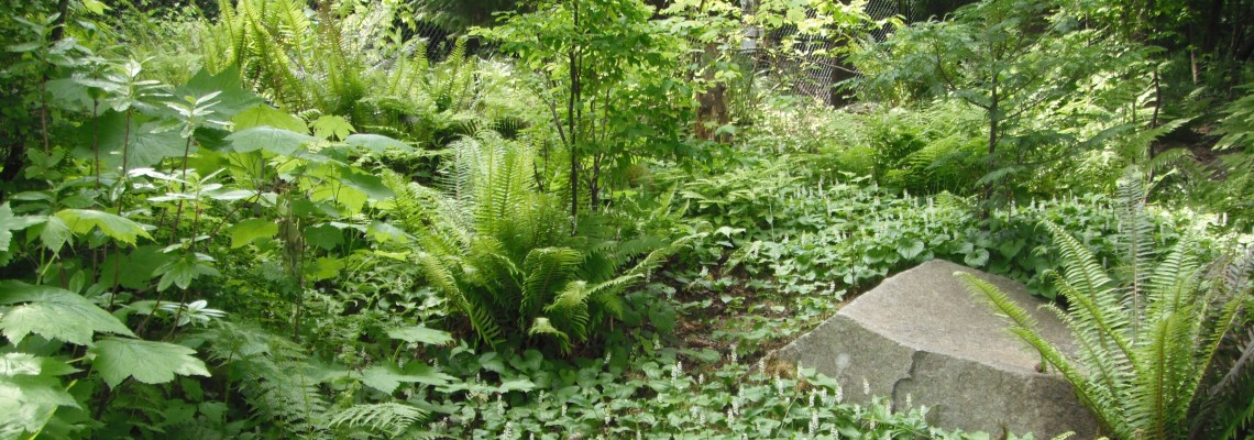 The Native Plant Garden At Point Defiance Park In Tacoma Washington
