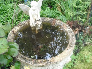 "My ""scummy"" fountain is always full of life!"