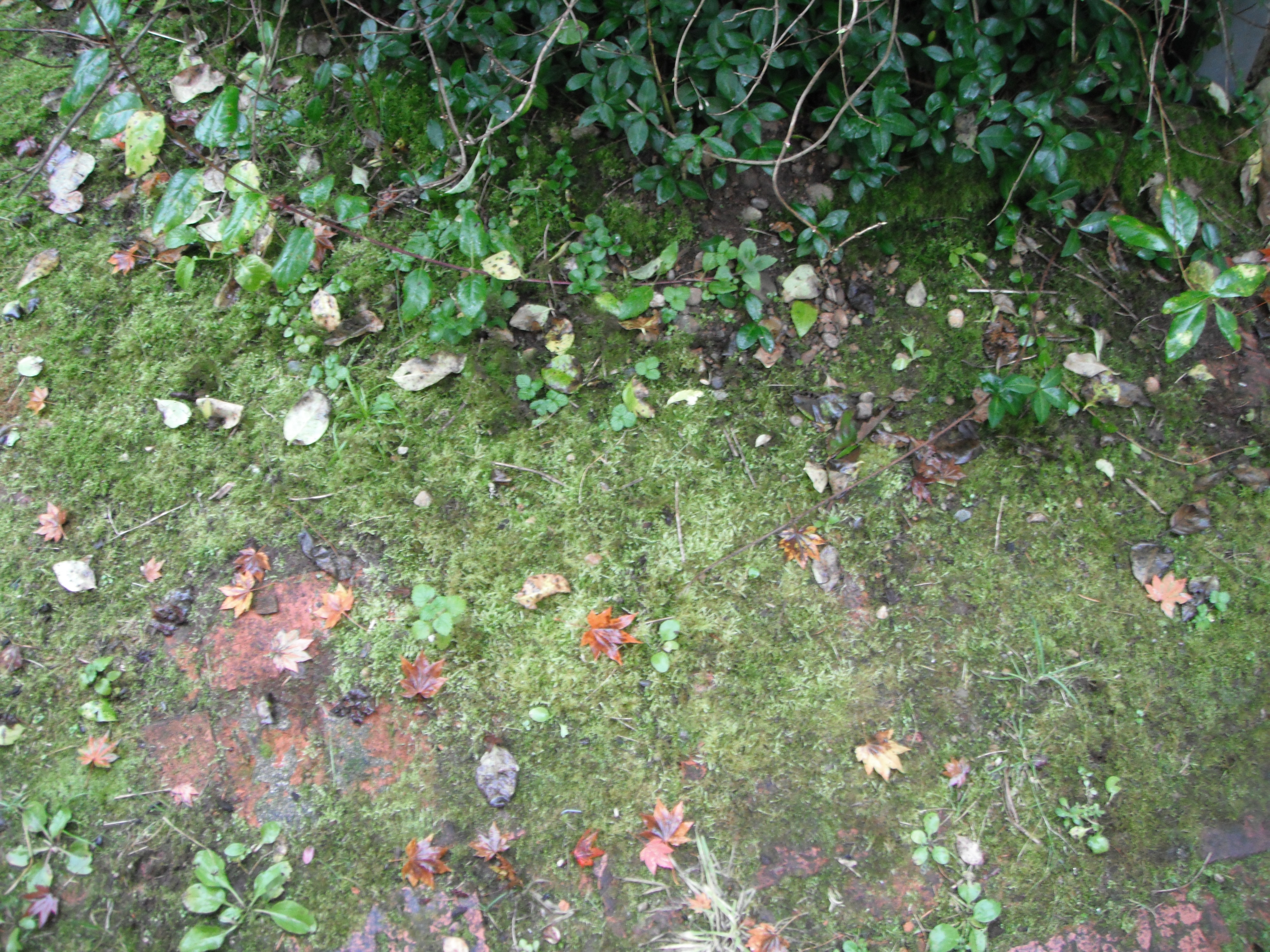 Mosses In The Garden Good Or Bad Habitat Horticulture Pnw