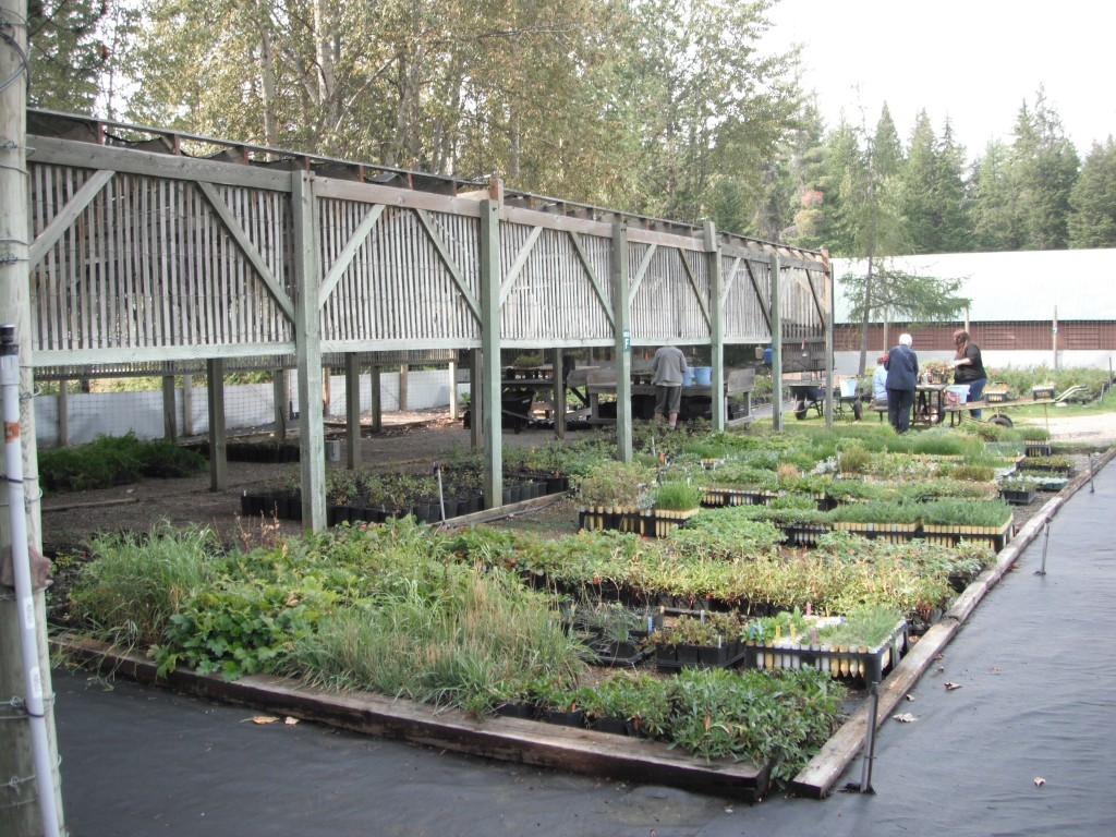 Volunteers at the Native Plant Nursery at Glacier National Parks
