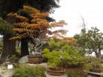 Elandan Gardens Bonsai